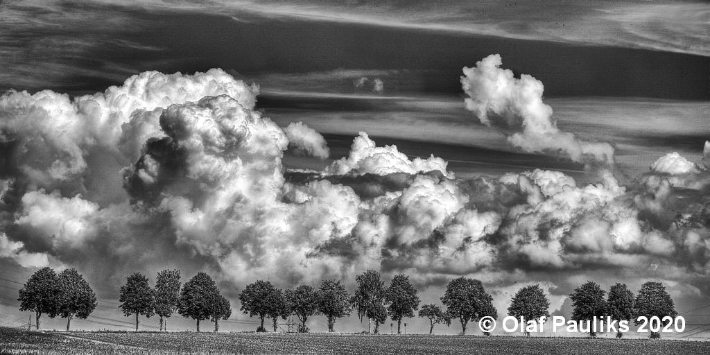 Bäume und Wolken