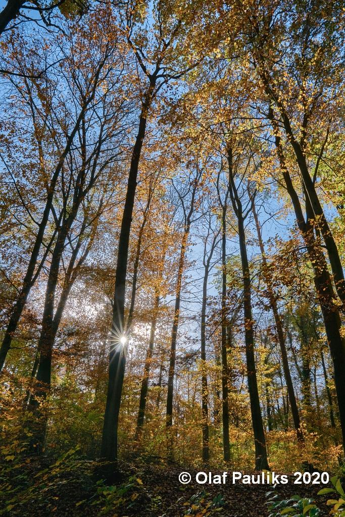 Lüner Holz